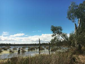 Yorta Yorta site visit Reedy Swamp